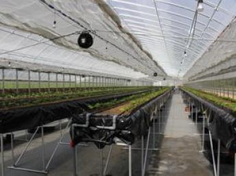 \未経験者歓迎/精密鋳造製造業を生業とする会社が作るこだわりの高級イチゴをあなたも栽培しませんか?