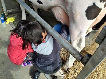 酪農の仕事を体験してみたい方大募集!