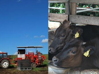 北海道の大地で、畑作と肉牛のお仕事を!いろんな農業を自分の経験に加えませんか?