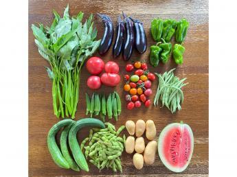 年間を通して80品目の有機野菜の栽培から販売まで携われちゃいます!