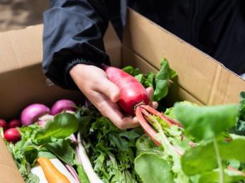 """多品目大量生産!内田農園で""""プロを超えた一流""""を目指して北本市のスターになろう☆"""