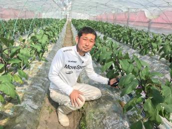 富田林が誇るブランド品「大阪なす」を代々生産しています♪長期的に働き、農園の右腕となり手腕を発揮してくれる方、独立をお考えの方歓迎!【一軒家タイプの寮あり】