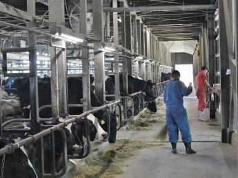 【未経験者歓迎・社会保険完備】\酪農をやりたい/情熱を活かせる牧場☆「楽しむ」ことを大切に一緒に頑張りましょう!
