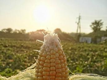 鳥取県から全国へ農業の新しいムーブメントを。アツい代表率いる「プロ野菜づくり集団」があなたの次なる情熱をかけるステージです♪