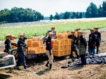 甘藷農園蔵元『鹿吉』で、さつま芋の奥深さと魅力を引き出す農業をしてみませんか?<多職種で募集中>
