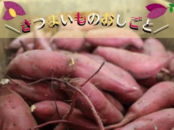 友達やカップルでの応募も歓迎☆やる気のある方は正社員登用あり!天皇賞受賞のサツマイモのノウハウを学びませんか?
