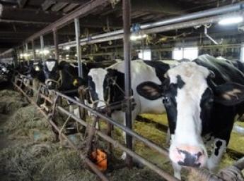 海の幸が豊富な日本のてっぺん稚内に来てみませんか?小さな牧場だからこそ1頭1頭の牛とじっくり向き合っています【未経験者歓迎・寮費無料】