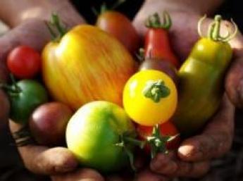 「固定種」「無農薬・無肥料栽培」「直営レストラン」私たちのこだわりをお伝えします!一緒に農業やりませんか?