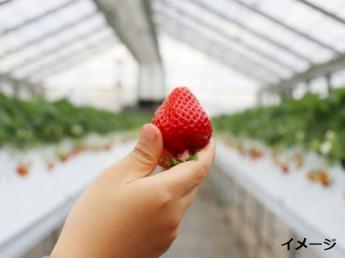 海外に日本の農業を広げるべく、東南アジアで一から生産の立ち上げに携わってみませんか?