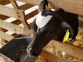未経験でも無理なく働ける♪週休2日休みも可能!牛好き家族の温かい牧場で働きませんか?