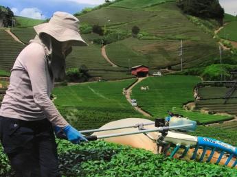 """=通える方限定1名募集=茶源郷とも呼ばれるお茶の名産地""""和束町""""で4月20日~7月中旬までの短期バイト募集です。未経験の方歓迎♪"""