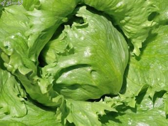 シーズン到来!高原野菜デビューの方も歓迎! 美味し~い新鮮な野菜を一緒に作ってみませんか? 《個室寮あり》 《3食食事付》 《期間満了ボーナス支給》