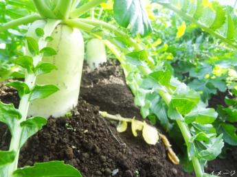 \未経験歓迎!始めやすい環境です/ まずは簡単な作業からお教えします! あなたも野菜作りのプロになりませんか?【正社員募集】