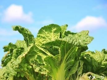 友達同士の応募もOK!自然広がる広大な地で稼げる短期農業始めてみませんか?◆3食つき・寮あり(寮費無料)◆