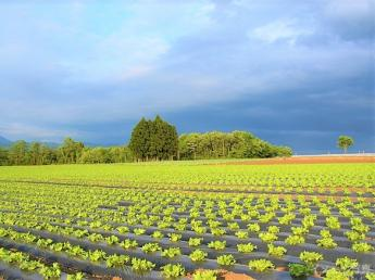 いよいよ収穫シーズンスタート!約3ヶ月間の農家生活を体験してみませんか?【生活費無料・経験者歓迎】