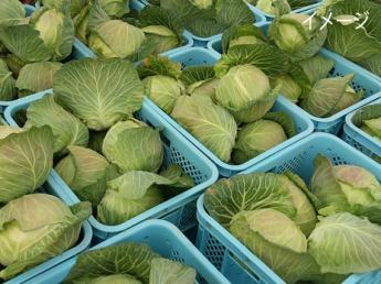 【個室寮あり・3食つき】10月末までの期間限定!高原野菜アルバイト!一緒に頑張ってくれる方を募集しています!
