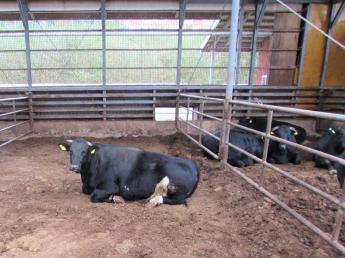 【肉牛部門スタッフの募集】牛たちの成長でやりがいを感じるお仕事です! 安心・安全な肉牛を育ててみませんか? ●未経験者歓迎 ●商品開発にも携われる!