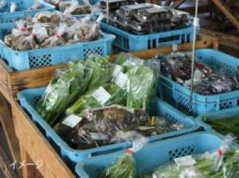 \寮費無料/野菜生産も直売所も両方経験してみませんか?【宮城県・期間限定アルバイト】