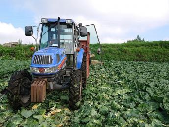 今年初めてアルバイトさんを募集いたします! 嬬恋村のザ・アットホームなキャベツ農家で一緒に働いてみませんか?