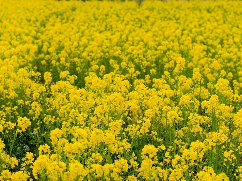 温暖な気候と首都圏に近い立地、技術に優れ意欲の高い農業者が集まる千葉県!魅力いっぱいのちばの大地で農業を始めませんか?
