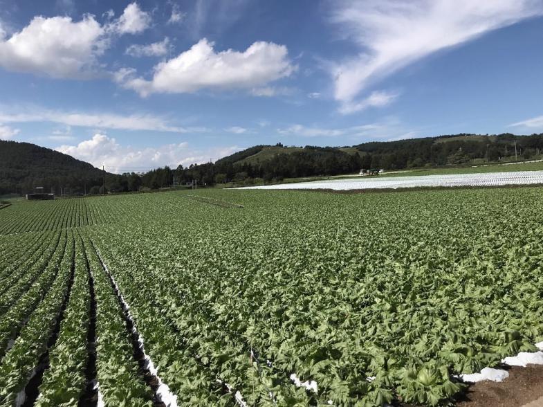 「あなたの一歩 応援します!!」移住希望地域ランキング第一位の信州で就農しませんか。