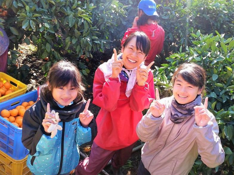 日本一のみかん産地で25年間継続しているアルバイト募集 今年もやります!! 300名の大募集!! \事前の募集説明会開催/