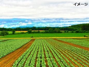 【個室寮(無料)+3食支給+交通費支給】脱サラした代表が経営する有坂農園だからこそ、未経験者の気持ちに寄り添えます!まずは短期農業始めませんか?