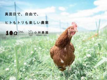 広々と自由に動き回れる《平飼い》で安心安全な卵を生産しています 2013年に新規就農!2018年の天災も乗り越え、法人化も完了! 『真面目で、自由で、ヒトもトリも楽しい農業』をテーマにさらなる飛躍を目指し増員募集!