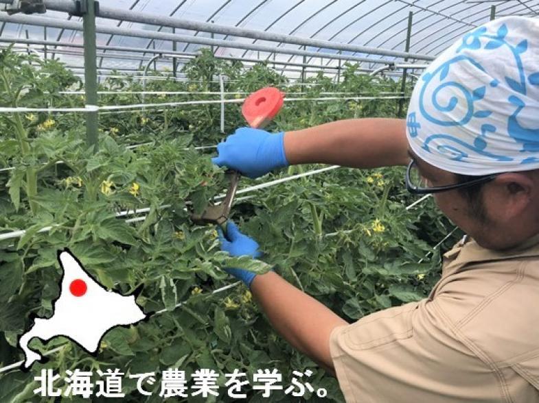 農業を学び、土を耕し、種・苗を植えて作物を栽培する農家を目指しましょう!