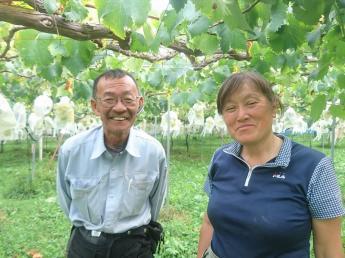 ぶどうの収穫シーズンスタート! 山々に囲まれた雄大な自然の中で、たわわに実ったぶどうを収穫してください! ~新規就農から23年の夫婦が営むあたたかい農家です~ 【期間限定&長期アルバイト同時募集!】
