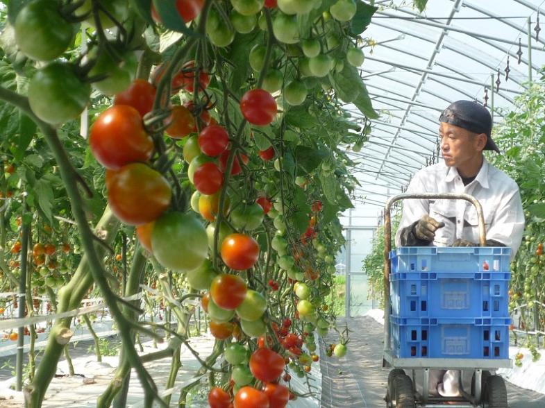 【ミニトマト収穫作業体験あり♪ 先着10組!お早めに!!】★東京圏、関西圏の方は新幹線の半額助成あり★就農をお考えの方にピッタリの、『北広島町就農体験会』開催!!