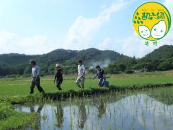 日本の原風景が残る『日本のふるさと』遠野で無肥料無農薬、自然栽培米を生産しています!【未経験者歓迎】【独立就農支援】