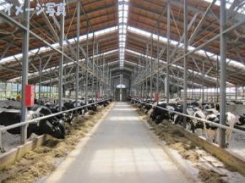 京都市街から車で30分の酪農一貫経営牧場!牛たちの「心の声」を敏感に感じ取る、それが私たちの仕事です。