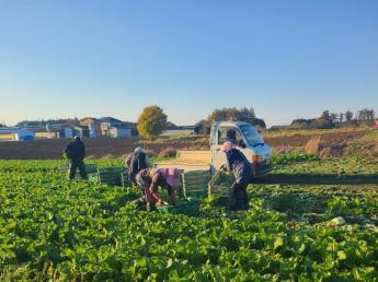 苗から自社で生産するこだわり!多品目栽培しています!農業に興味のある方大歓迎!◎アルバイト募集◎未経験歓迎◎