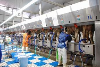 【経験者採用】岩手県の歴史ある観光農場で牛の飼養管理を担当される方を募集!