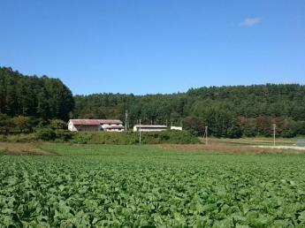地域を引っ張る農業法人を目指して! 雄大な北アルプスの山々の麓で、共に汗を流し、成長していきませんか?
