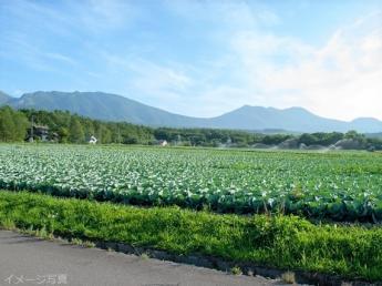 脱サラ ⇒新規就農 ⇒2年目で年収1,000万円達成! 農業でも十分生活できます!本気の農業始めましょう!