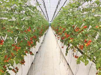 高糖度フルーツミニトマトの生産を全国へ 2023年までに栽培面積30ヘクタール、生産量5,000トンの生産農場開設予定! 【農業経験者・未経験者同時募集】