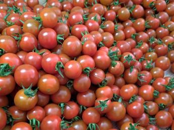 ミニトマトの収穫、栽培管理、パック詰め等のお手伝いをお願いします!未経験の方も大歓迎!フルタイムでもパートタイムでもOK!