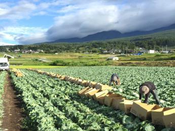 こだわりの塩熟野菜の生産!浅間山の麓で野菜生産に携わりませんか!?