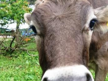 チーズ工房が新たに完成! 「これぞ北海道!」という大自然の中で牛たちと共に自分らしく暮らしませんか?