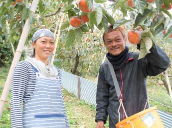 【4月中旬頃〜6⽉中旬頃までの短期限定】おいし~い柿をお届けするために、摘蕾作業のお手伝いをお願いできませんか?=寮あり=