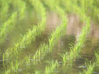 4月~5月末までの田植えのお手伝いをお願いします! 未経験の方も大歓迎です! ◎寮あり