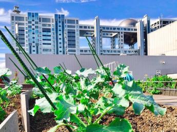 職場はお台場!\無農薬で多品目の野菜を栽培しています/都会ならではの農業のスタイルを一緒に作っていきませんか?
