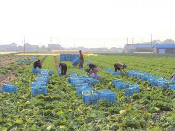 ◆期間限定アルバイト◆人々を笑顔にできる仕事、それが農業!プロの農家を目指している方支援します!《寮あり》