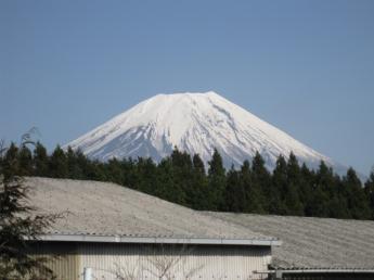 日本一の富士山と牛と共に暮らしませんか? 酪農に関心のある方募集!6ヶ月以上~OK!