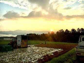 開放感MAXの涼しい土地で高原野菜を生産しています! 農業が好き!農業に興味がある!というヤル気のある方、一緒に爆農しましょう!