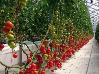 山形県内最大級の大規模農業用ハウスで、トマト生産【正社員募集!】 ◎未経験の方歓迎!◎