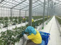 株式会社平洲農園
