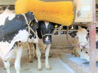 【キャリアアップ求人=酪農経験者募集=】\9月に新牛舎完成予定/オープニングスタッフ募集~ご自身の経験を活かして、キャリアアップしませんか?~